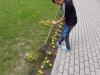 Gėlių priežiūra