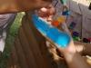 Renginys-šventė Tarptautinei vaikų gynimo dienai paminėti